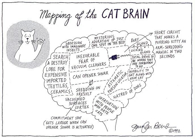 CAT BRAIN MAPPING