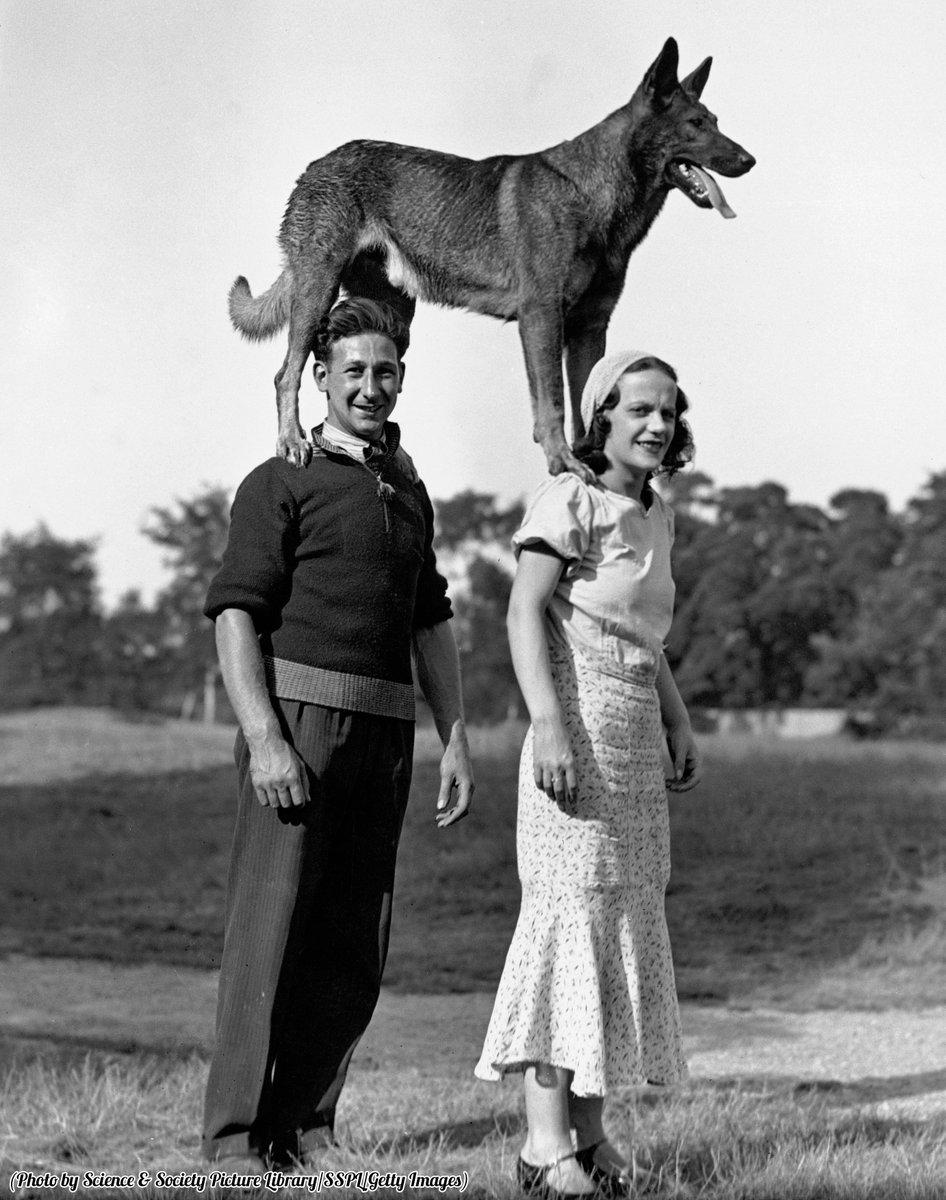 COUPLE WITH A DOG STANDING ON THEIR SHOULDERS